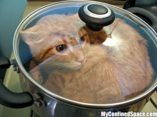 manger des photos de la chatte chaud amature sexe vidéos