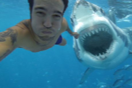 shark-selfie-460x307.png