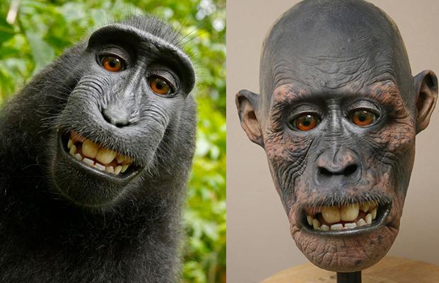 Le singe au selfie a t d capit par un chasseur - Le singe d aladdin ...