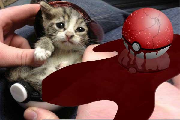 Il a voulu faire rentré son chat dans une pokéball : 1 victime