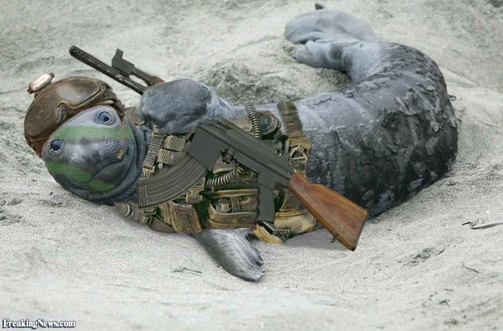 Seal-With-a-Machine-Gun-29919