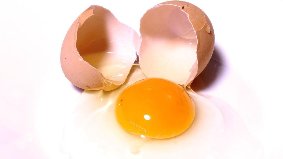 egg-2147169_960_720