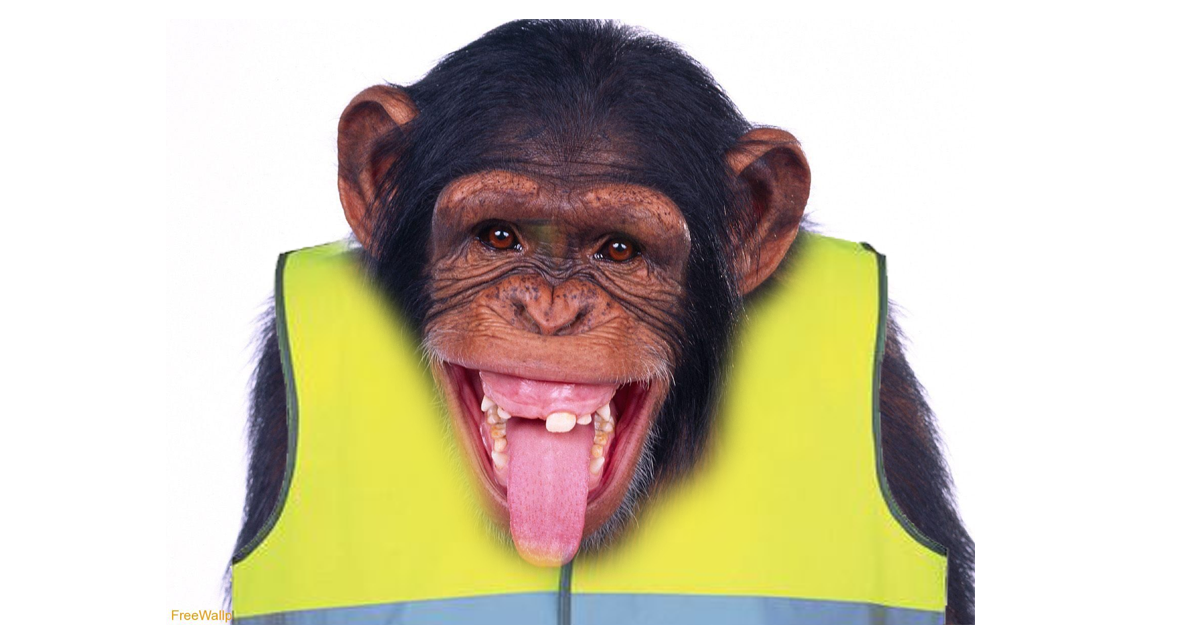 chimpppp
