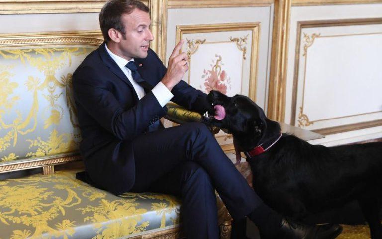 Coronavirus transmis par les chiens: Macron envisage de faire euthanasier tous les chiens de France