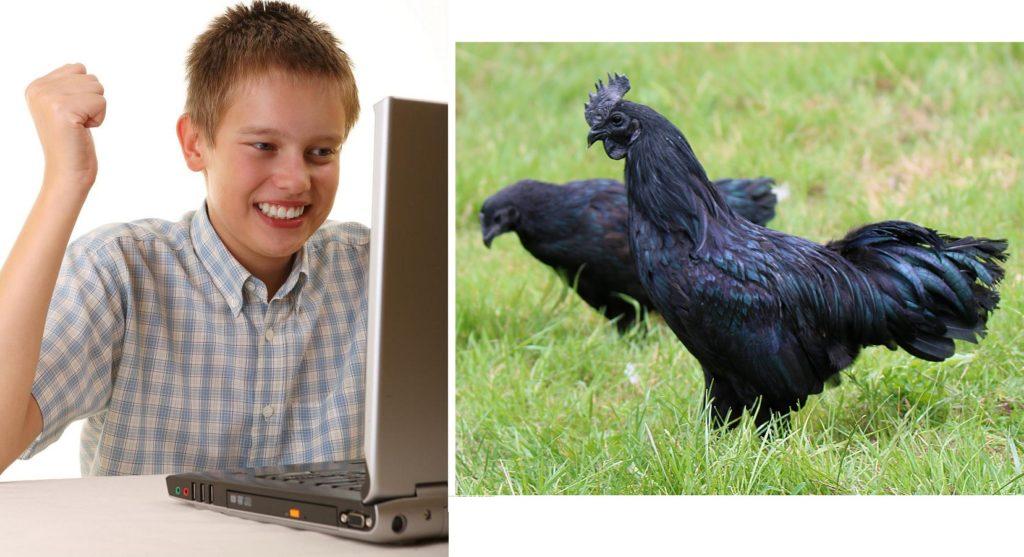 Internet big black coq